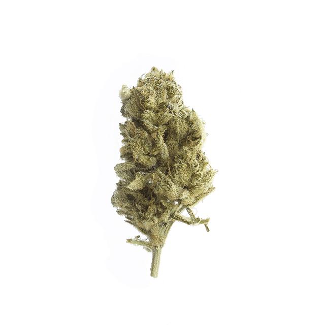 cbd-grossiste-cannabis-fedora