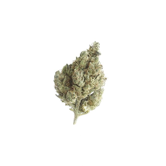 cbd-grossiste-cannabis-legal-carmagnola
