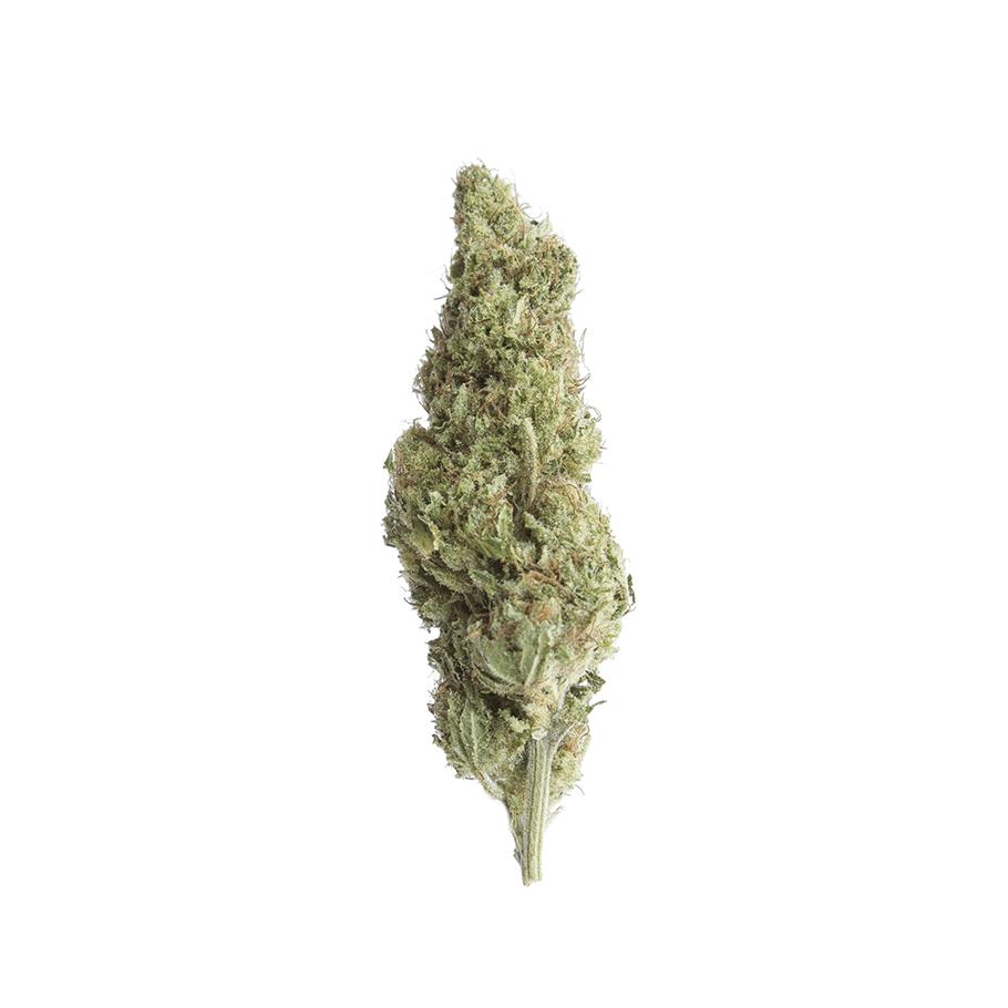 cbd-grossiste-cannabis-legal-epsilon