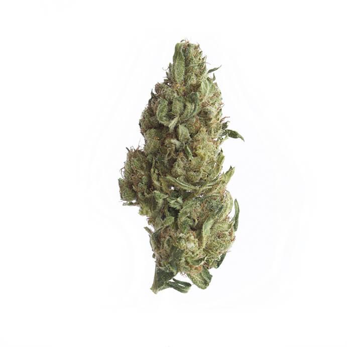 2BEHEMP-cbd-cannabis-grossiste-lemonkush