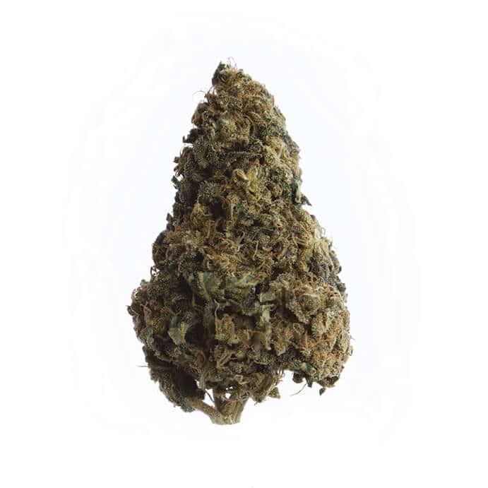 2behemp-cbd-cannabis-grossiste-purplehaze