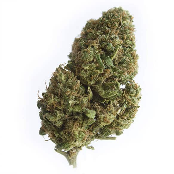 cbd-grossiste-cannabis-ak47
