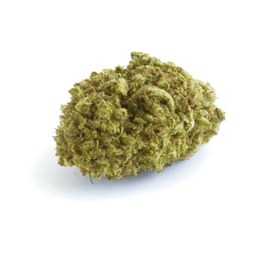cbd-grossiste-cannabis-cbd-kush