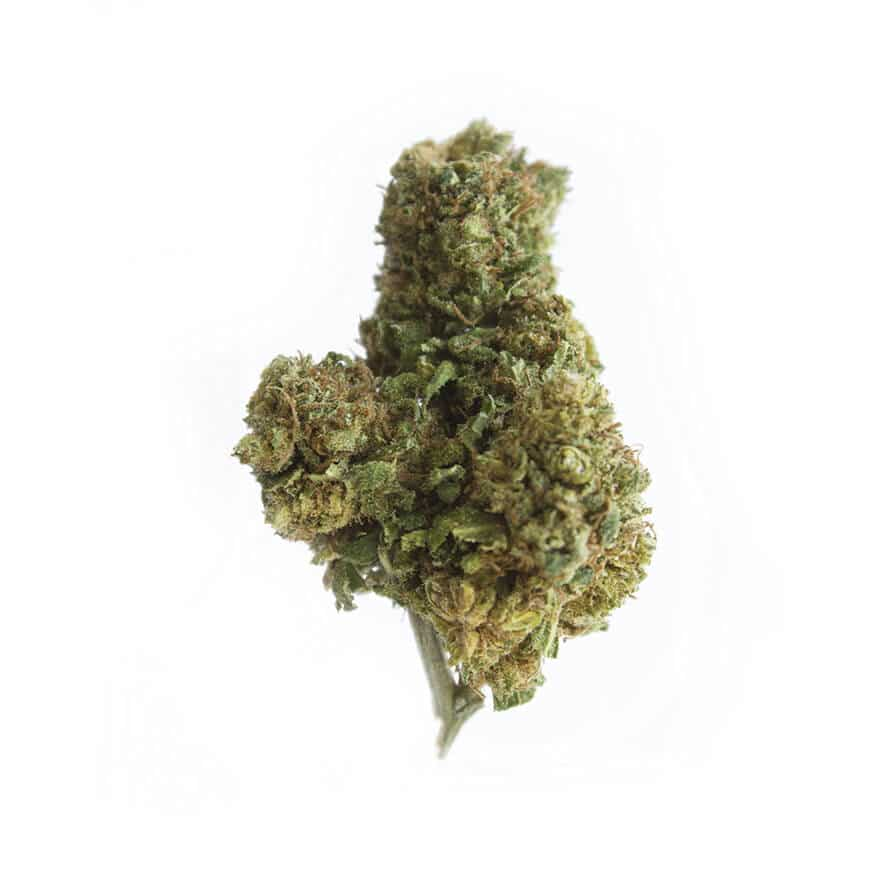 cbd-grossiste-cannabis-girlscoutcookies