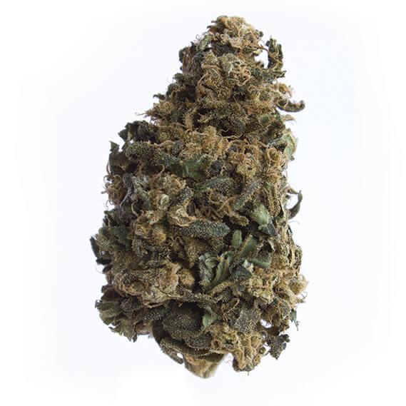cbd-grossiste-cannabis-grossiste-chocolope