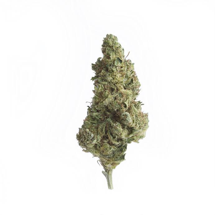 cbd-grossiste-cannabis-legal-silverhaze