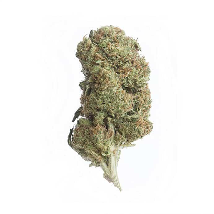 cbd-grossiste-cannabis-sourdiesel
