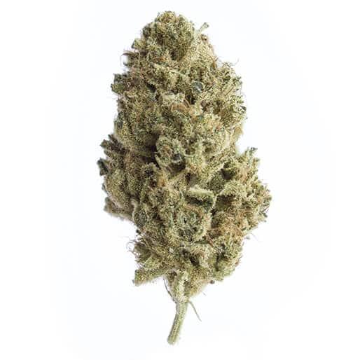 cbd-grossiste-cannabis-superskunk