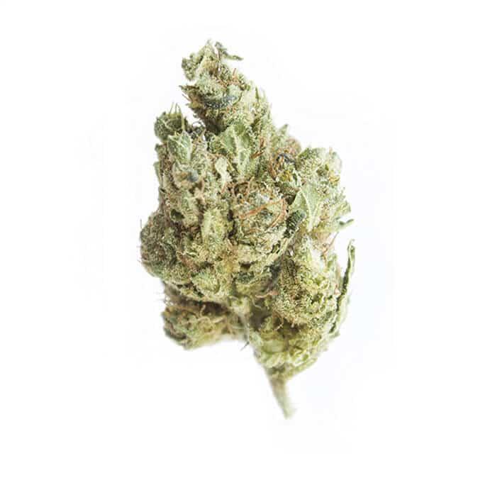hempvetic-cbd-cannabis-grossiste-superlemonhaze