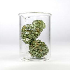 cannabis-light-en-gros